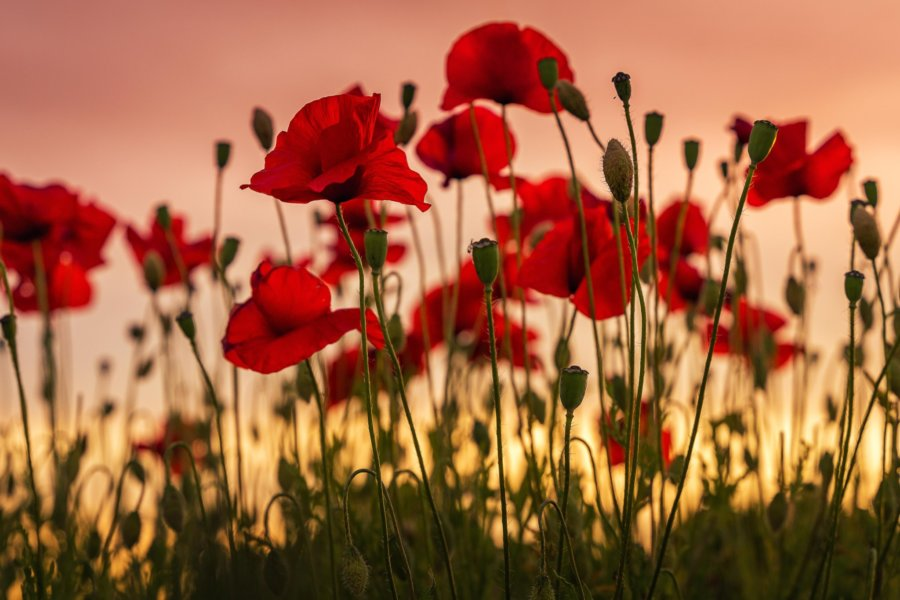 ANZAC Day Parade and Ceremony: 25 April